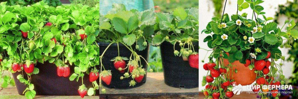 Горшки для выращивания клубники