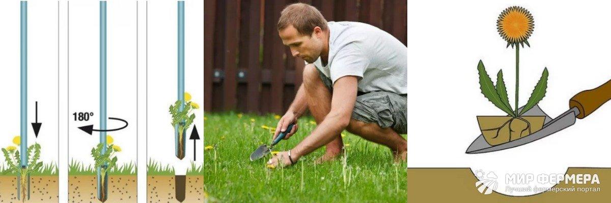 Как выкопать одуванчики с корнем